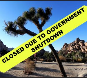 Joshua Tree Closed Due to Government Shutdown