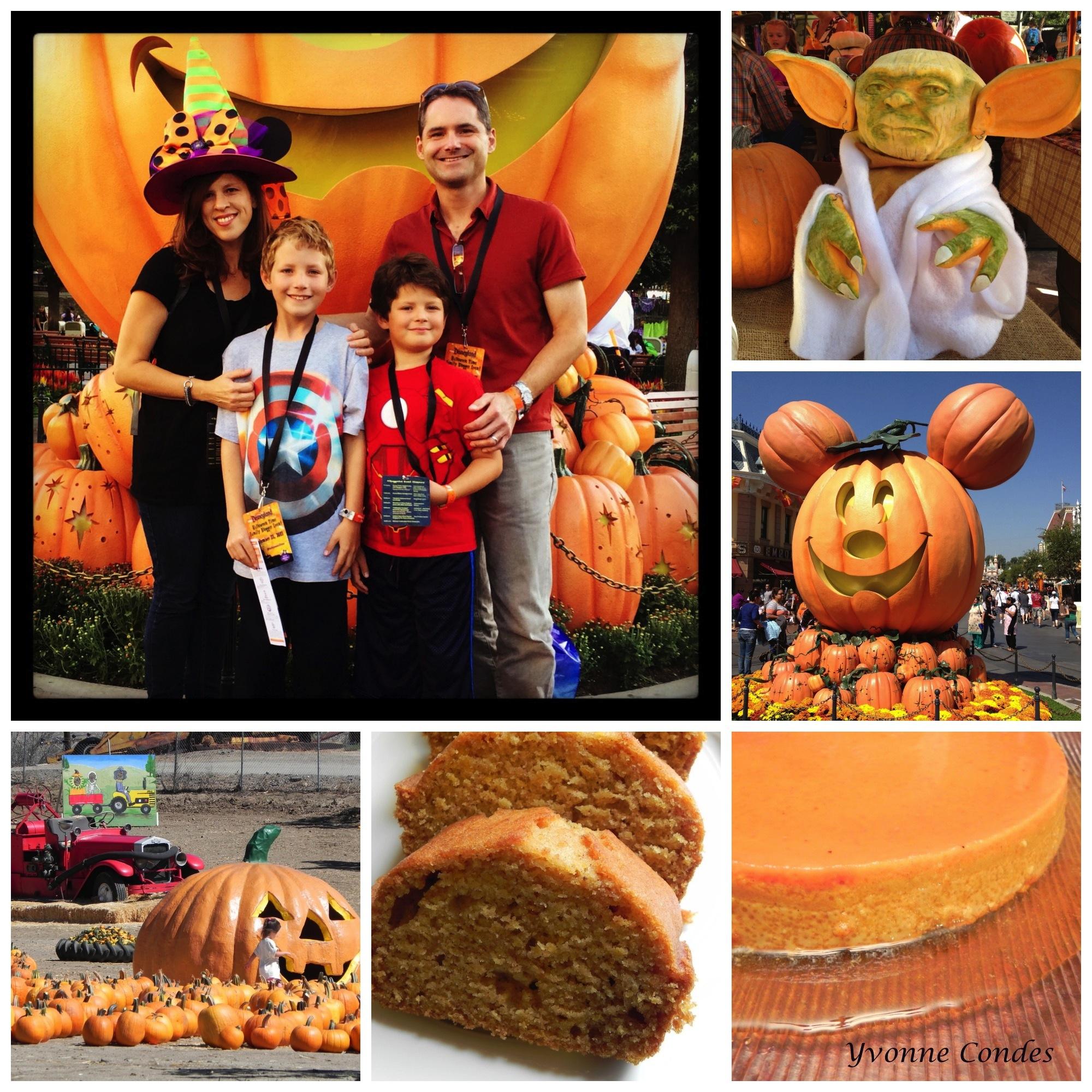 Pumpkin photos (by Yvonne Condes)