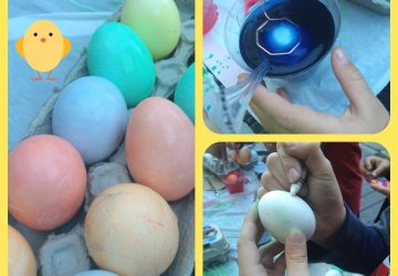 Eggs-photos-by-yvonne-condes