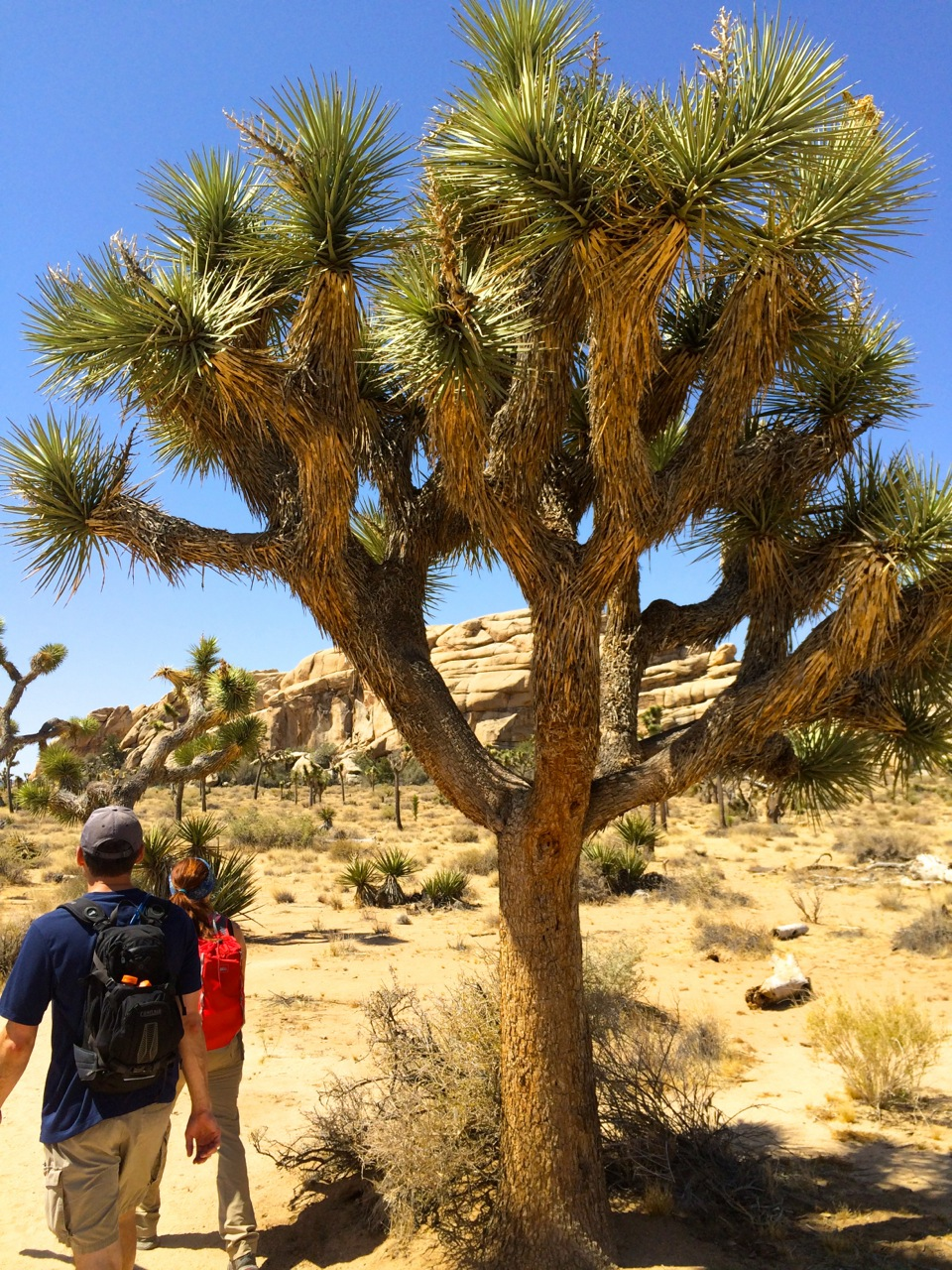 Joshua-Tree-Hikers-photo-by-yvonne-condes