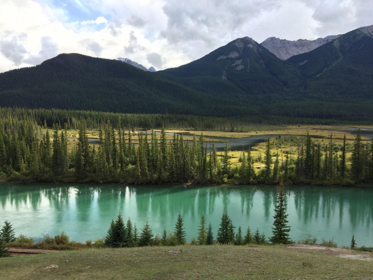 Trees-glacier-water