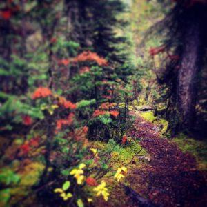 Hiking trail in Canada near Banff National Park