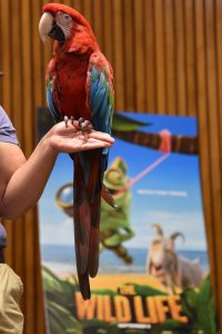 A Macaw similar to the one seen in The Wild Life