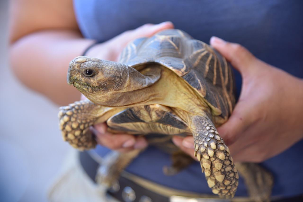 Tortoise at the San Diego Zoo
